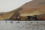 Paracas Peninsula and Bay