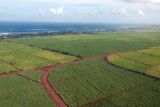 Sugar cane fields east of Kahului along the north shore of the central valley, Maui