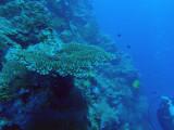 The Big Drop-off, Palau