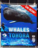 Whales temporary exhibition, Te Papa