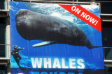 Amazing shot for the promotional poster for the Whales exhibition