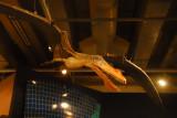 Te Papa - Pterosaur Anhanguera