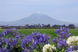 Mount Taranaki (Mount Egmont) last erupted in 1755