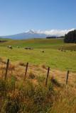 Sheep country around Waiouru
