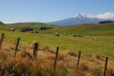 Pastureland south of Tongariro National Park