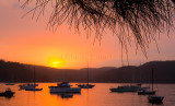 Pittwater sunset with she oak in landscape