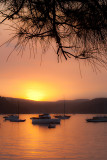 Pittwater sunset at Palm Beach with she oak leaves in foreground