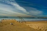 Dee Why beach with gulls