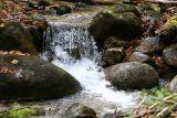 Rock in a woodland stream