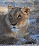 Kruger 2007