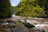 106 - Grand Portage: Pigeon River Downstream From High Falls