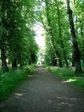 Walking towards Castle Howard.