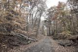 166, Road at Cranberry Lake Preserve, White Plains
