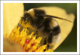 Well and Truly Pollinated