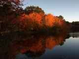 Autumn Glory.jpg