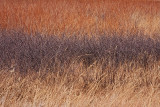 Prairie Tricolor