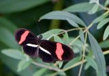 Found in Butterfly House