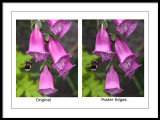Bee orginal and poster edges.jpg