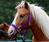 Lucky the pony