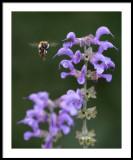 Bee prepared...
