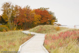 Grassy Walkway