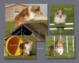 Moloney-Harmon 8x Layered Plaque montage.jpg