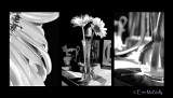 Flower & Vase  (B&W)