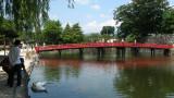 Feeding swans near the bridge