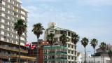 Palm trees along the beachfront