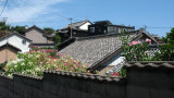 Rooftops and summer flowers