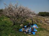 Early spring picnic at Sōri-ike