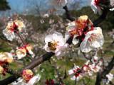 Bee on a blossom, Sōri-ike