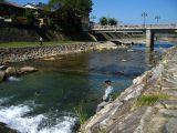 Feeding fish along the Miya-gawa