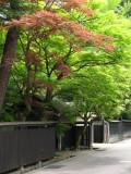 Newly green trees along a historic street