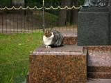 Contented cat beside the K.E. v. Baer statue