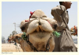 Confronting the Camel