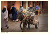 Donkey Traffic after the Rain