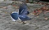 bluejay landing.jpg