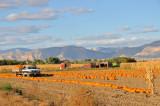 Pumpin Patch & Corn Maze