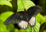 Butterflies in New Zealand
