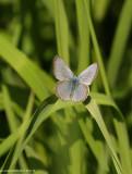 papillon_et_insecte