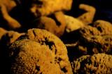 sponge 3.jpg