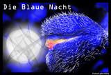 Gallery Blue night - Die Blaue Nacht - La nuit Bleue