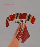 Red Devils:  parachute regiment free fall display team
