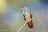 2008 Hummingbirds