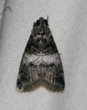 moth 68