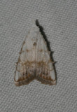 moth 69