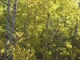 autumn IMG_1057.jpg
