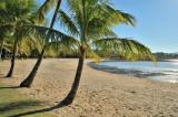 Airlie Beach palms