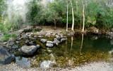 Cedar Creek Falls 3 ~
